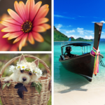 Photo Collage Editor  MOD (Monthly) 2.1.80