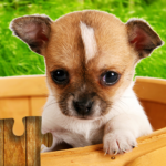 Dogs Jigsaw Puzzles Game  28.5 MOD